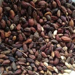 Dried Neem Fruit, Packaging Type: Packet