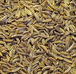 Fresh Jeera Seeds