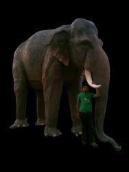 FRP Elephant Statue