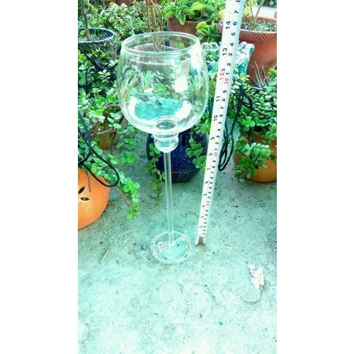 Wine Glass Shaped Terrarium Glass Pot At Rs 140 Piece Noida Id