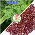 Subabhul Seeds