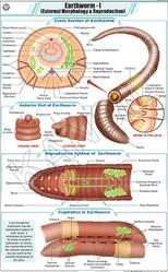 Earthworm I For Zoology Chart