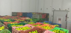 Lemon Cold Storage Room