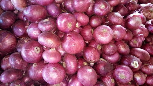 Indian Fresh Red Onion - View Specifications & Details of Red Onion