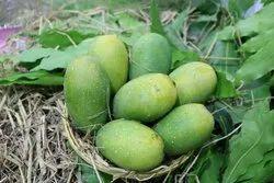 Green Common Mango (Dasheri), Packaging Type: Carton, Packaging Size: 10 Kg