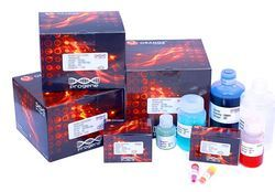Determination of DNA by Colorimetric method  Teaching Kit