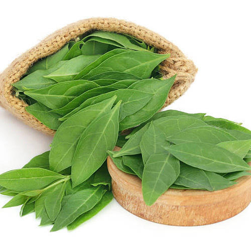 Henna Leaves Clean At Rs 150 Kilogram Henna Leaves Id 4867243188