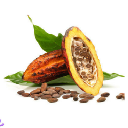 Cocoa Butter - Manufacturers & Suppliers in India