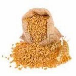 Indian Brown Hard Wheat