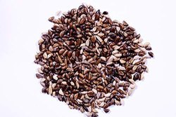 Napier / Elephant Grass/ Pennisetum Purpureum Grass Seeds