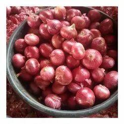 一个级红洋葱,用于人类消费,可用洋葱尺寸:25毫米至75毫米