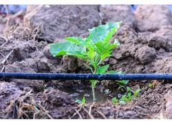 Cultivation Drip Irrigation System