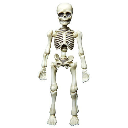 human skeleton figure at rs 1500 unit human skeleton id