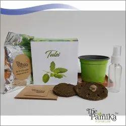 THE PARNIKA Tulsi Plant