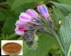 Comfrey Bark Extract 10:1