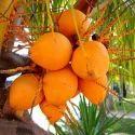 Orange Coconut