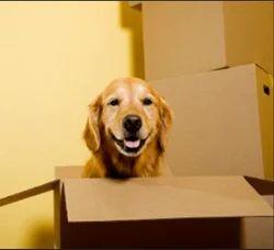 Pet Moving