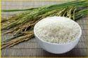 Rice RC01