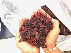 Indian Hibiscus Flower