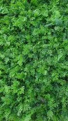 Green PE Greenwall - Pine Leaf PL- 81, Size: 60 cm * 40 cm