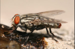 Integrated Flies Control