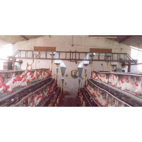 Automatic Poultry Feed System