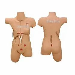 Surgical Suture and Bandage Model