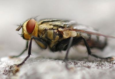 Outdoor Pest Control Services - Fly Control Wholesale