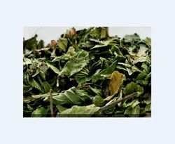 Buchu Leaf Oil