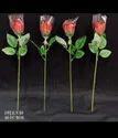 Rawsome Shack Rose Valentine Day Gifts