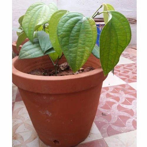 225 & Clay Flower Pot