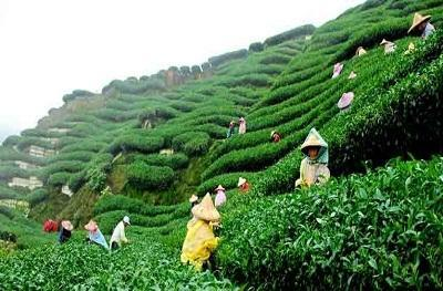 darjeeling tour in nagpur new vision holidays id 14892337133