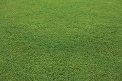 Natural Green Australian Lawn Grass