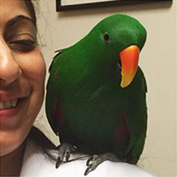 Exotics Animals Treatments Service