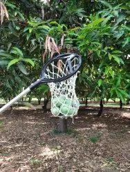 Hectare Fiber Mango Harvester
