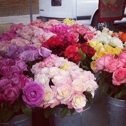 Gift Pack Fresh Rose