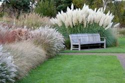 Landscaping Grasses