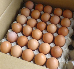 Pure Poultry Brown Eggs