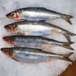 Frozen Sardine