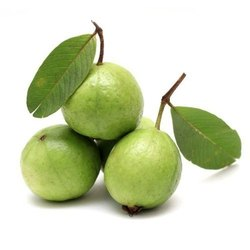 Round Indian Fresh Guava