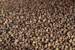 NC Buckwheat Seed
