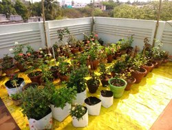 Ldpe Black Terrace Garden Kit