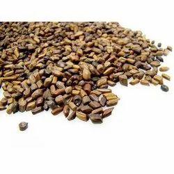 Cassia Semia Seeds