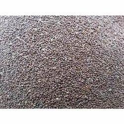 Tulsi Rama Seed