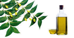 Neem Oil - Azadirachta Indica