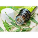 Tea Tree Hydrosol Oil