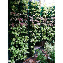 Home Backyard Gardening Service