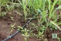 Emitter Drip Irrigation