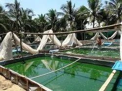Organic  Veggi Spirulina Capsules
