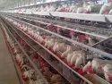 Comfort Plus Poultry Cage